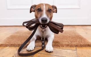 Поводок для собак своими руками: самостоятельно создаем необходимый инвентарь