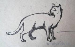 Как сделать кошку из пластилина: осваиваем искусство лепки