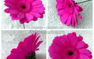 Герберы из фоамирана: роскошные цветы для украшений и интерьера