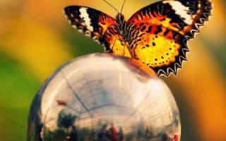 Техника «крылья бабочки» в домашних условиях из подручных материалов