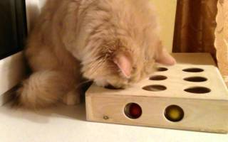 Игрушки для кошек своими руками: идеи и советы