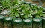 Клумбы из пластиковых бутылок своими руками: способы оформления