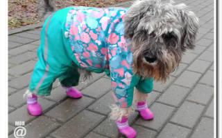 Комбинезон для собаки: забота о своем питомце