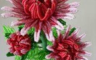 Хризантема из бисера: как сделать прекрасное самостоятельно