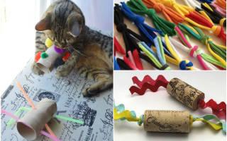 Игрушки для котят своими руками: развиваем своих питомцев