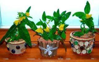 Горшки для цветов своими руками для озеленения интерьера