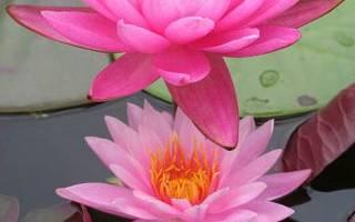 Цветок лотоса своими руками: создание символа гармонии