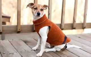 Выкройки одежды для собак своими руками для стильного и современного питомца