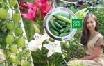 Сад своими руками: полезные советы для новичков