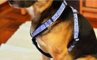 Шлейка для собак своими руками: мастерим стильный ошейник